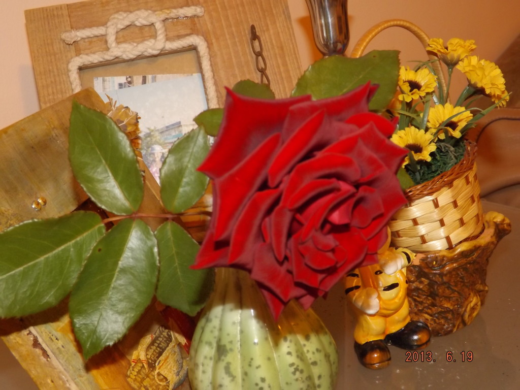 red rose meanings