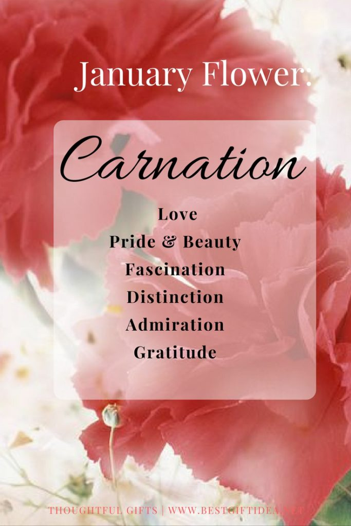 Best Gift Idea Carnation Flower Meaning Flower Of The Month