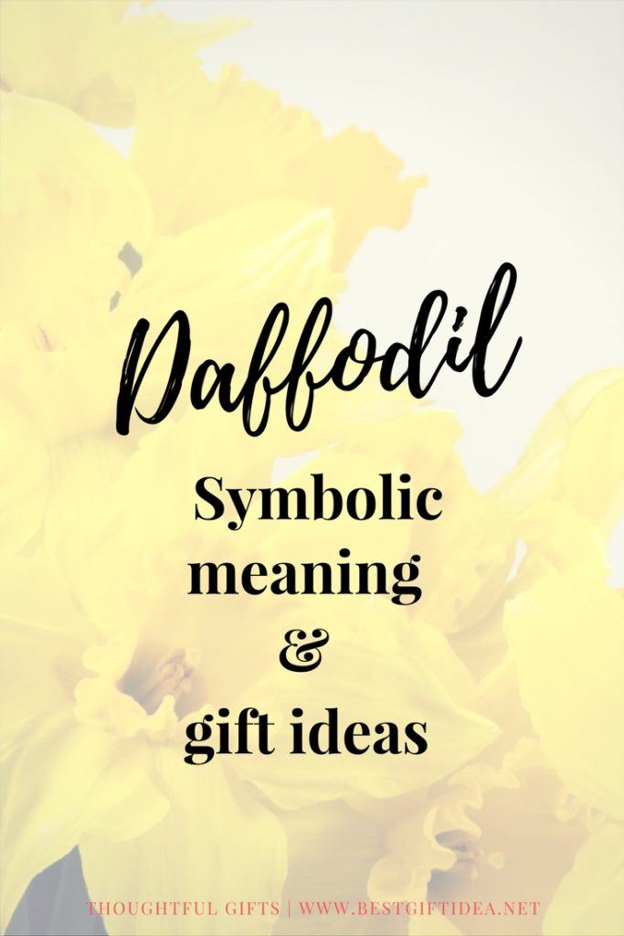 daffodil gift ideas and meaning