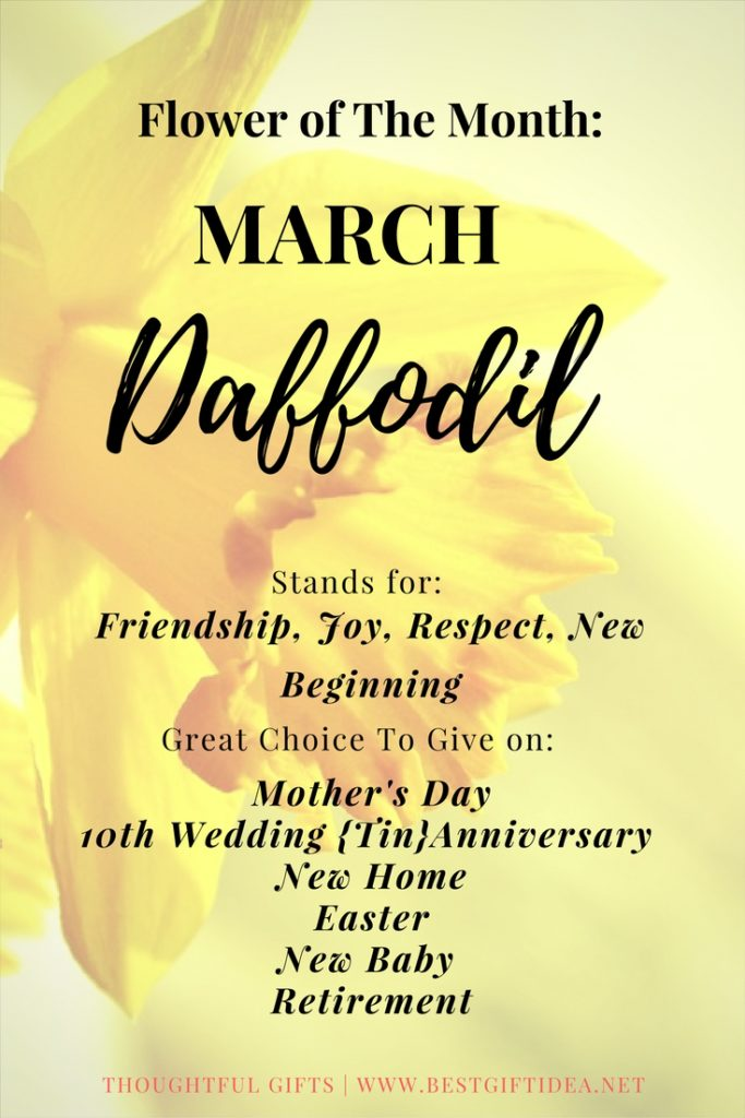 flower of march daffodil ymbolic meaning and gift ideas